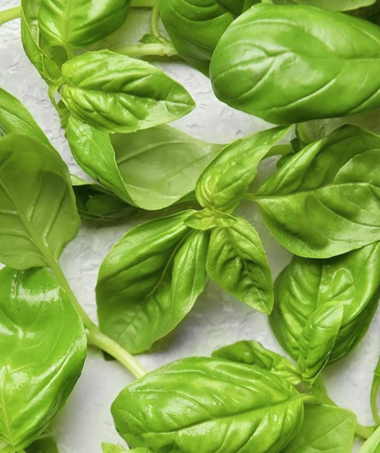 Fresh-Cut Basil