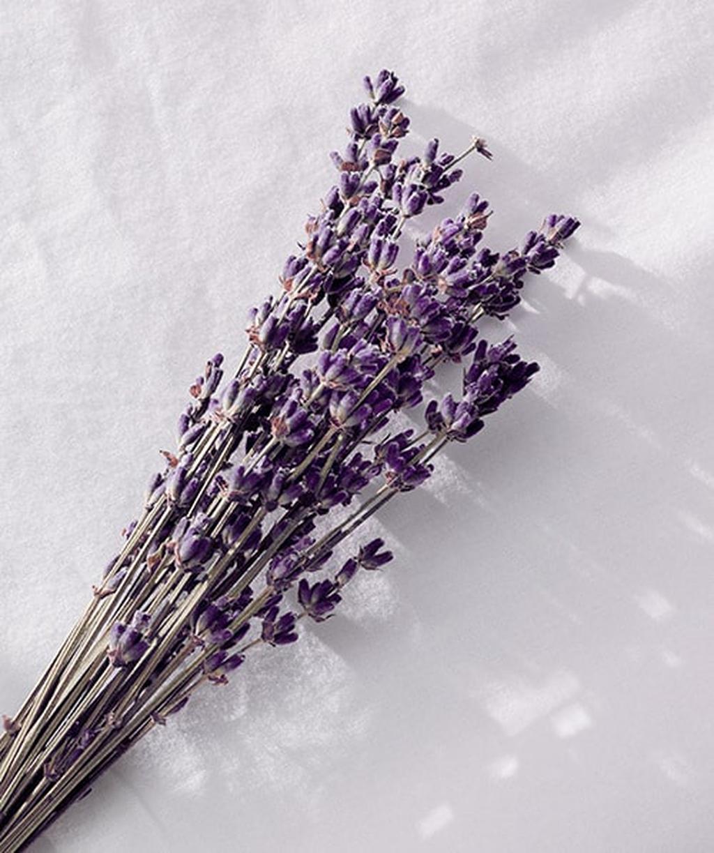 Lavender Cedar