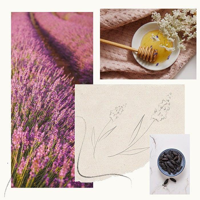Lavender Honey Fragrance Experience