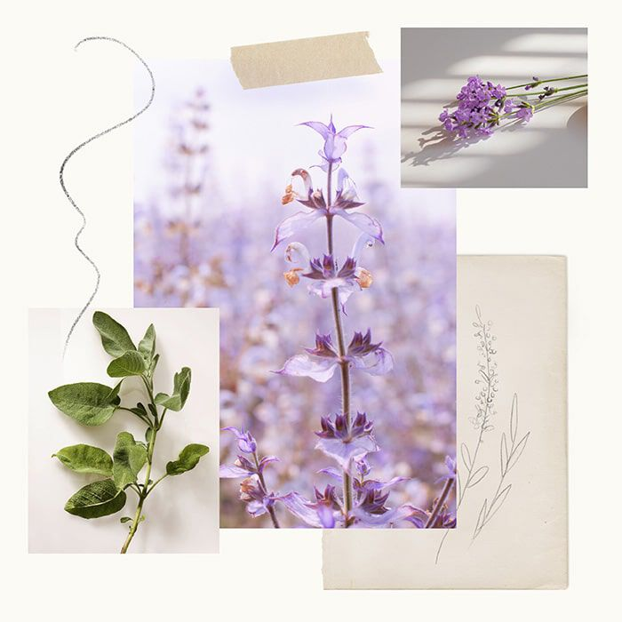 Lavender Fragrance Experience