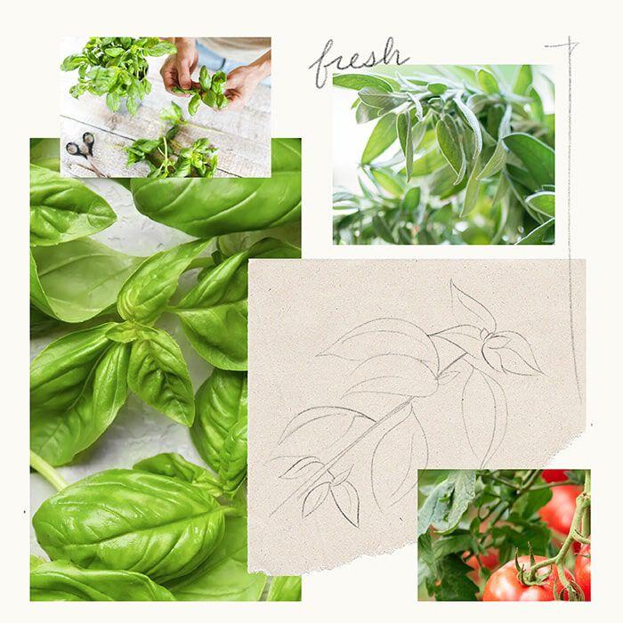 Fresh-Cut Basil Fragrance Experience