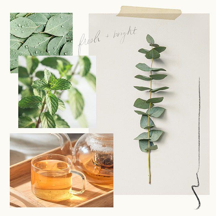 Eucalyptus White Tea Fragrance Experience