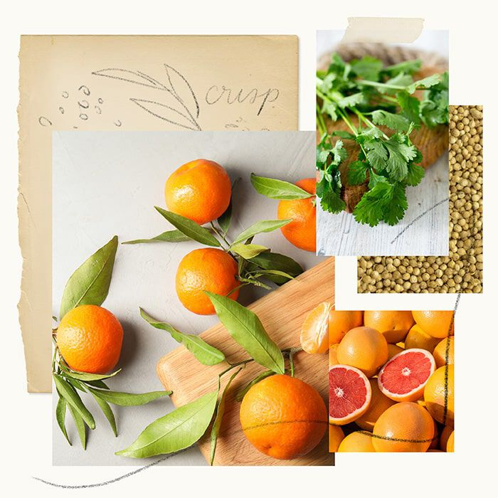 Mandarin Coriander Fragrance Experience