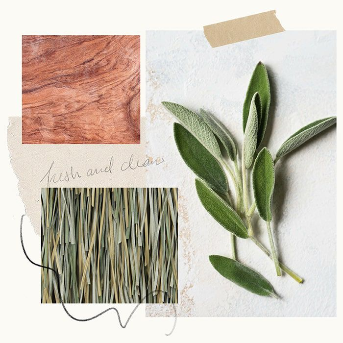 Vetiver Rosewood Fragrance Experience