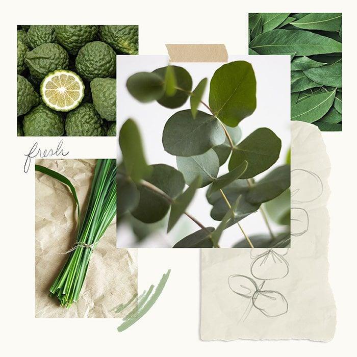 Eucalyptus Fragrance Experience