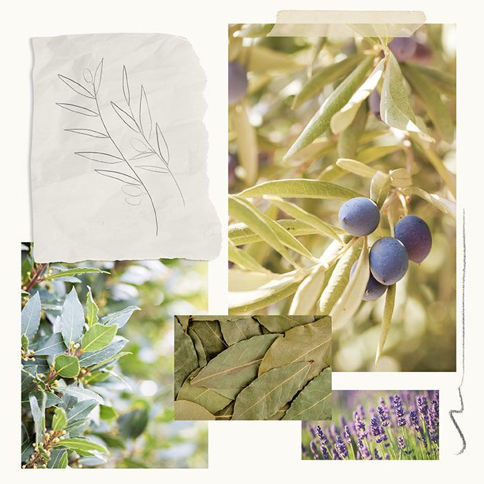 Olive Leaf Fragrance Experience