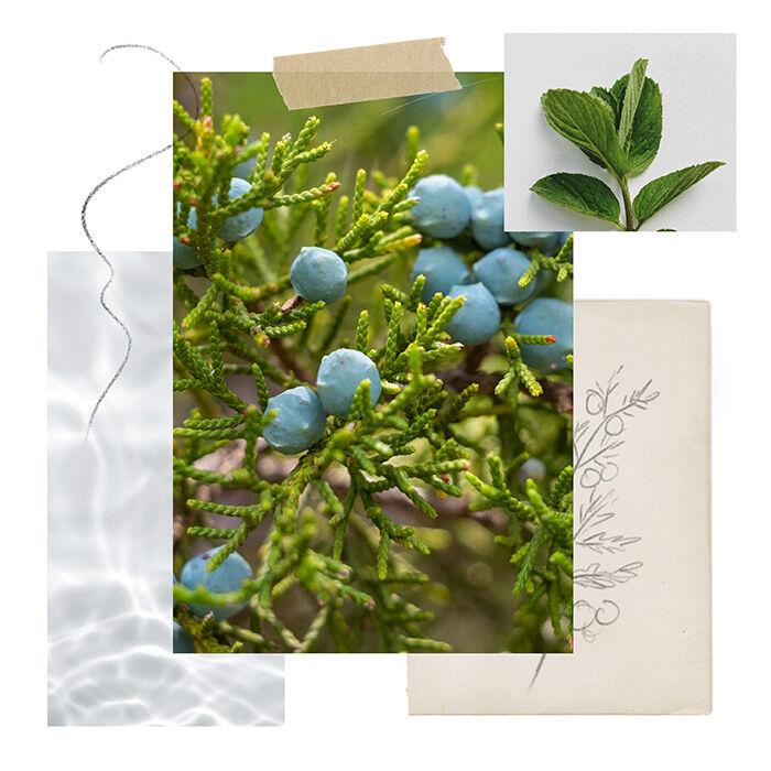 Juniper Mint Fragrance Experience