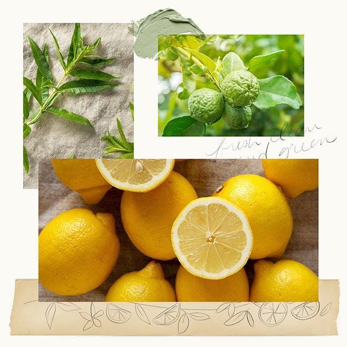 Lemon Leaf Fragrance Experience