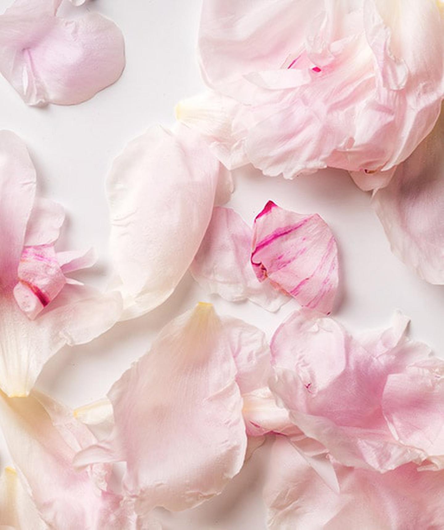 Goldleaf Gardenia
