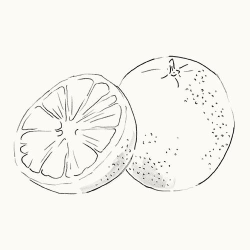 Grapefruit